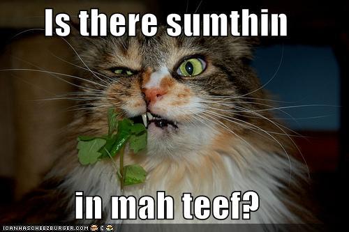 Funny Brushing Cats
